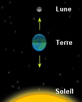 The Lunar Attraction and The Tides